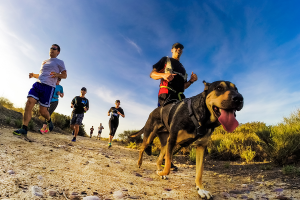 Several people wearing sunglasses and a dog jogging